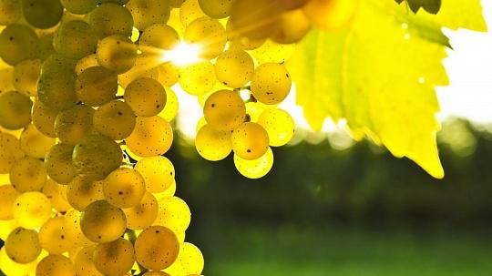 «Ягоды-жизни»-виноград
