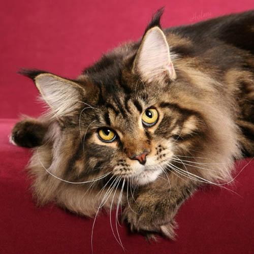 Кошки, которые стоят немалых денег