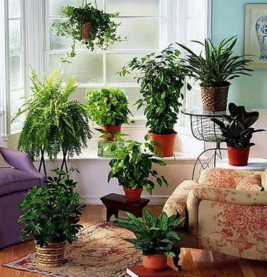 Растения в интерьере - красивые фото
