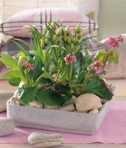 Растения в интерьере - красивые фото1