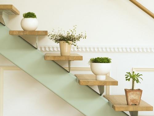 Растения в интерьере - красивые фото7