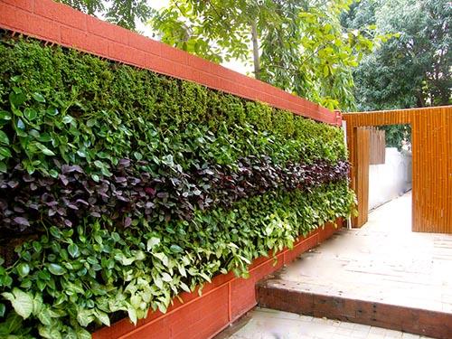 Вертикальное озеленение - фитомодуль