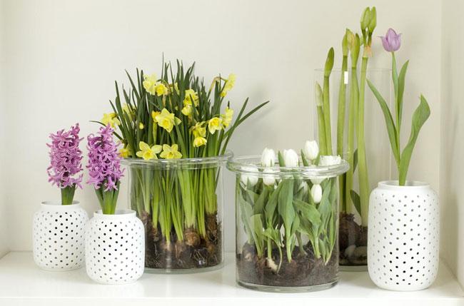 Растения в гостиной