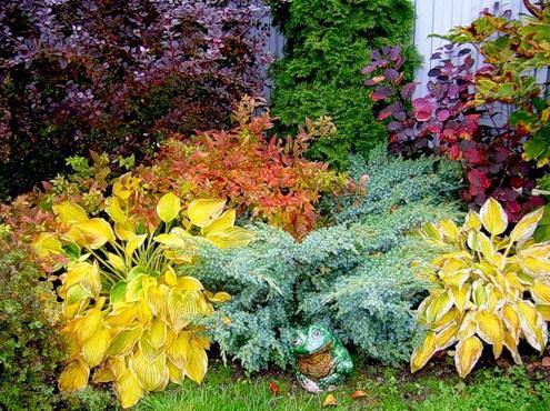 Хосты в саду-как выбрать растения
